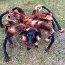 Hilarious Giant Mutant DogSpider Prank