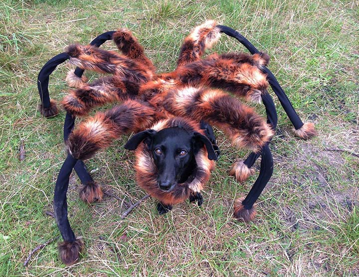 Giant Mutant DogSpider