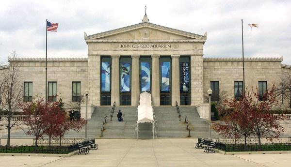 Chicago' Shedd Aquarium Waiving Admission 24 Days
