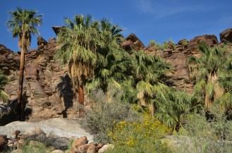 Murray Canyon (37)