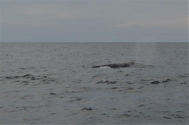 Une baleine !