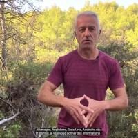 Althéa Provence : AIGUILLES DE PIN SYLVESTRE : LE VRAI DU FAUX (SURAMINE, ACIDE SHIKIMIQUE, ETC.)