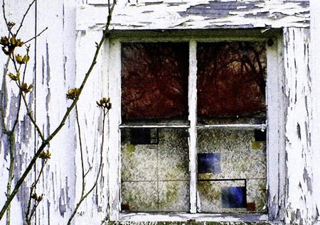 brambled window