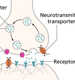 an action potential or spike causes neurotransmitters to be released across the synaptic cleft causing an electrical signal in the postsynaptic neuron  [ 1937 x 1066 Pixel ]