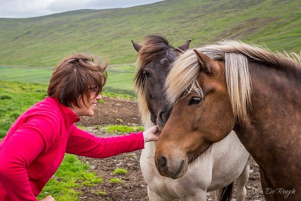Icelandic horses along the F35