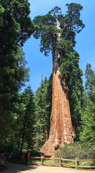 General Grant tree, Sequoia & Kings Canyon National Park. Second largest tree in the world.