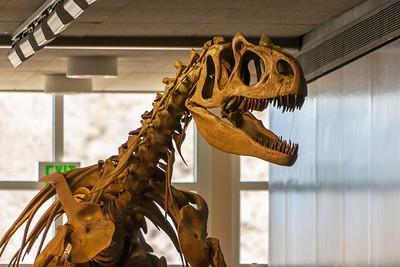Quarry Exhibit Hall, Dinosaur National Monument, Utah