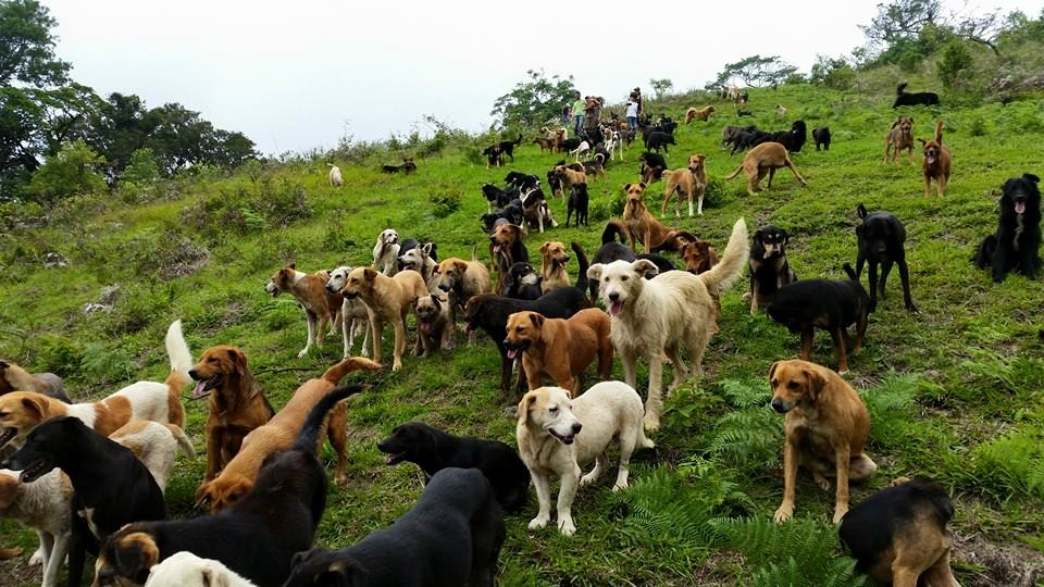 Image result for Territorio De Zaguates