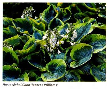 Frances Williams