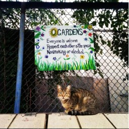 One of the garden kitties bid you welcome
