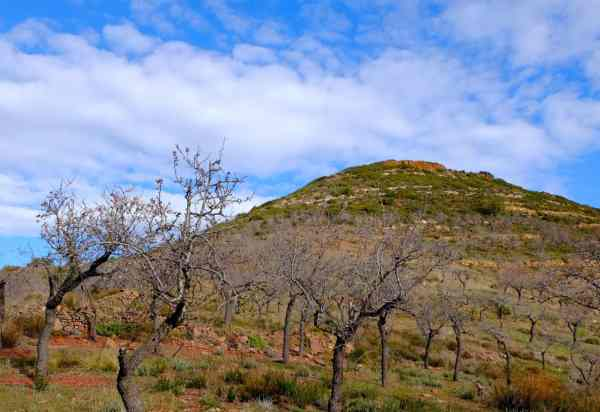 Mandorleto all'interno della Sierra di Espadán. Le mandorle crescono bene, per suolo e clima. Castellón, Spagna