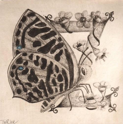 Z Australian 'Zebra Blue Butterfly'_Trudy Rice Qgw Lettered print exchange