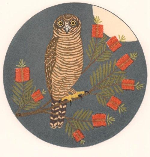 Kate-Hudson-Rufous-Owl-&-Callistemon