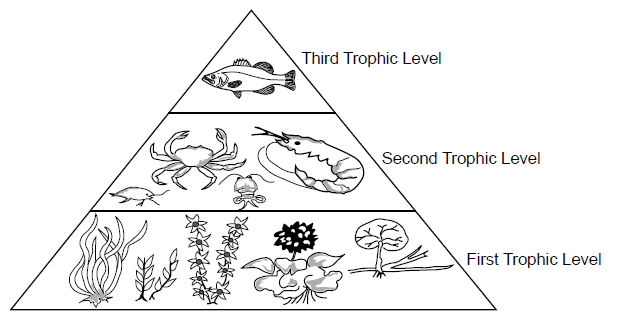 Ecology Unit Exam Review