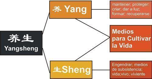 Yangsheng y su significado