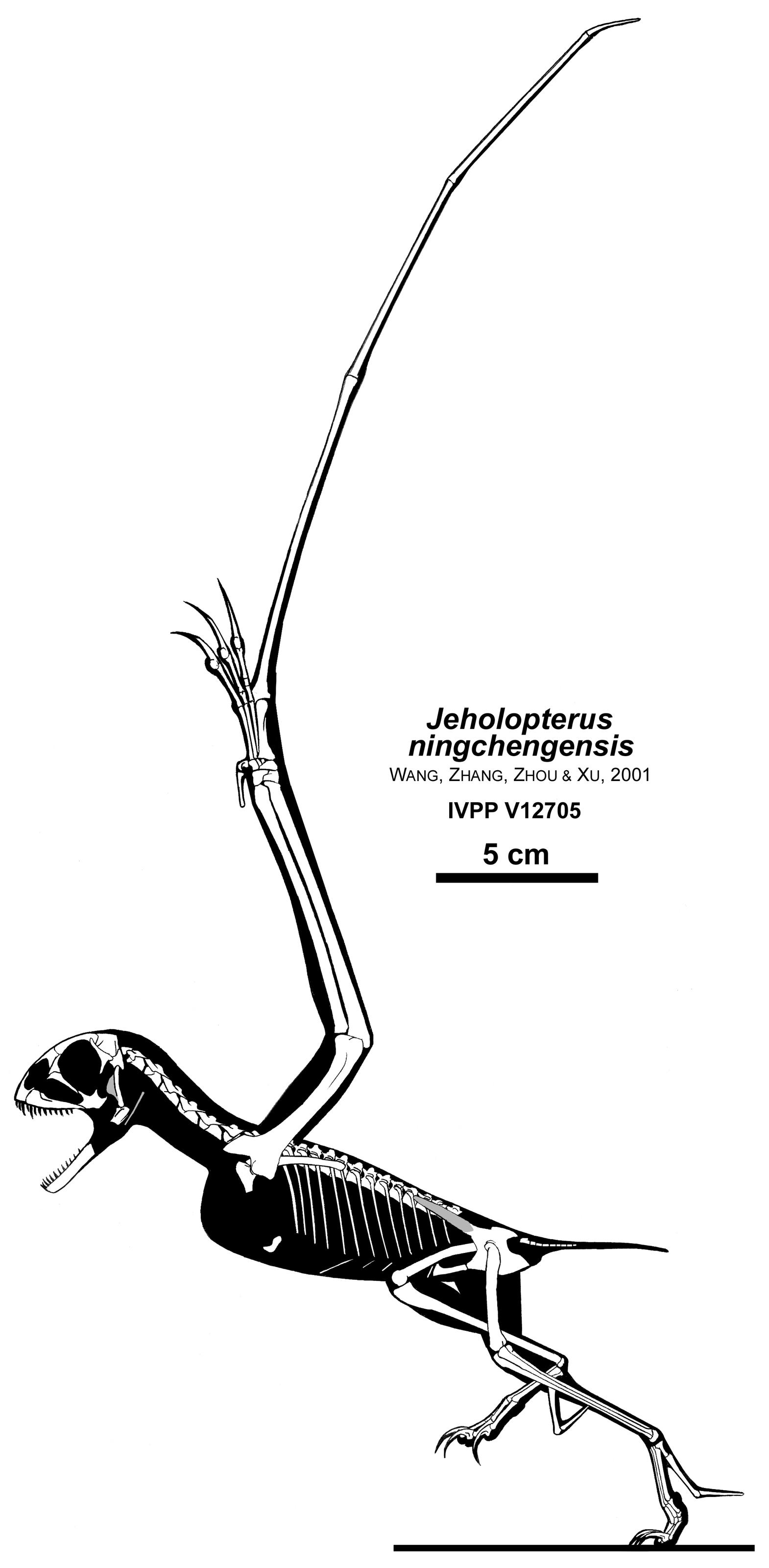 Skeletal Posture