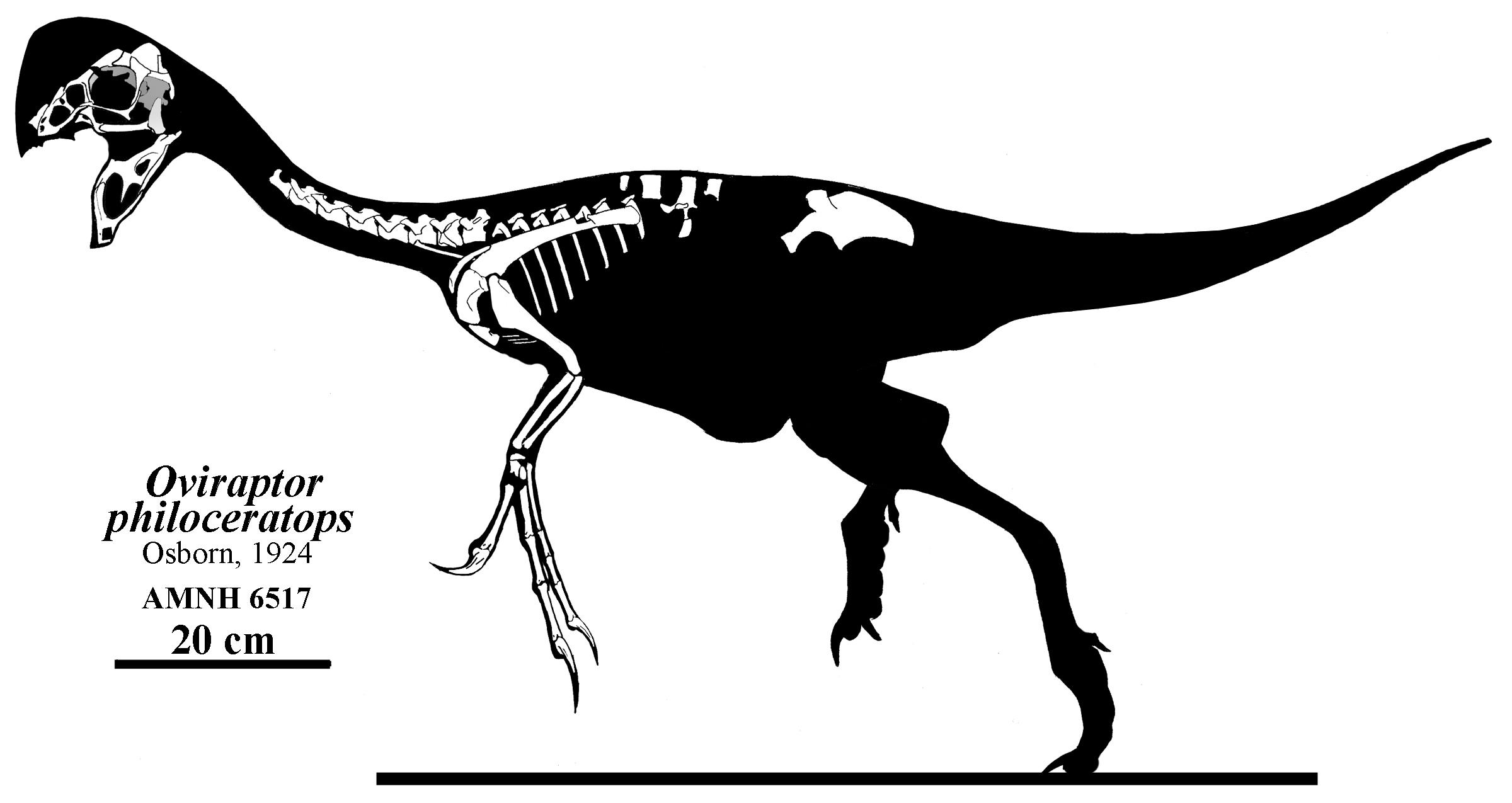 What Isn T Oviraptor