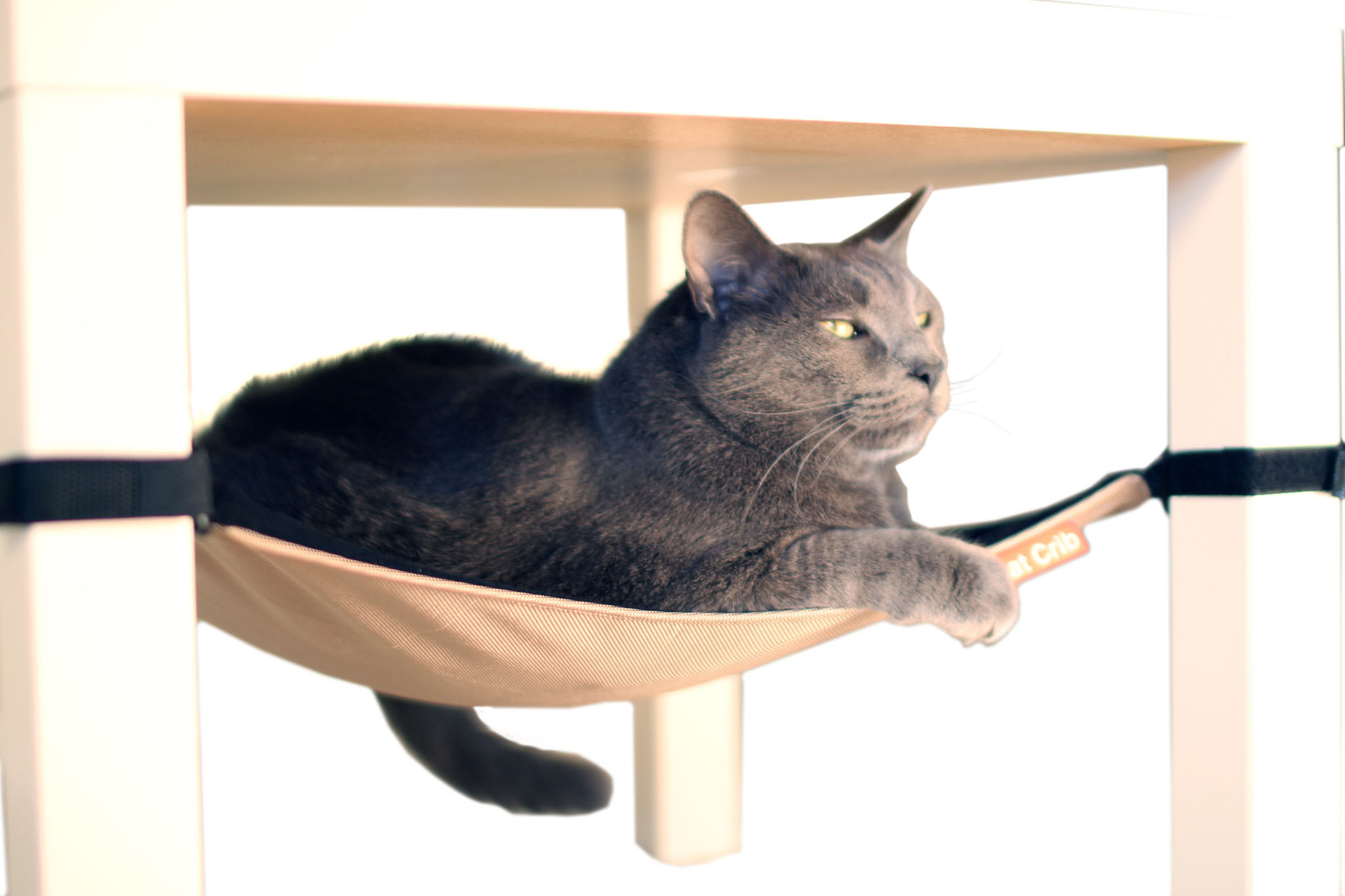 cat hammock under chair swing in living room grab an awesome toy or treat for your today toys