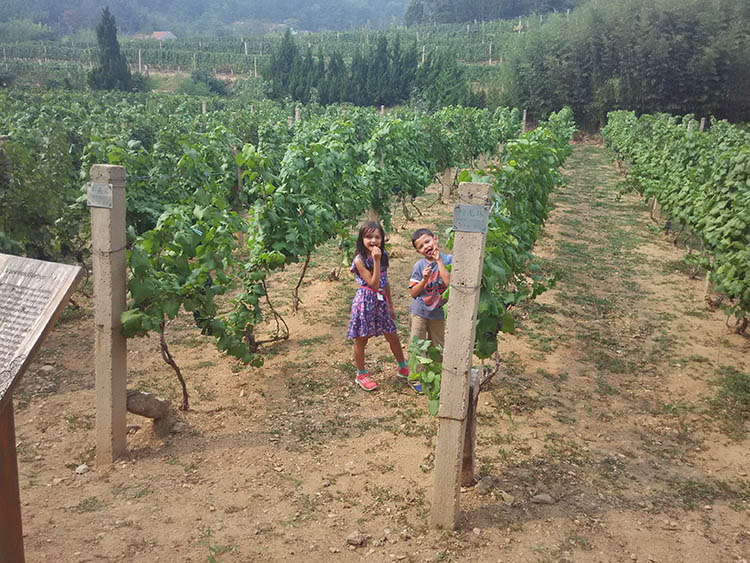 Qingdao China Huadong Winery