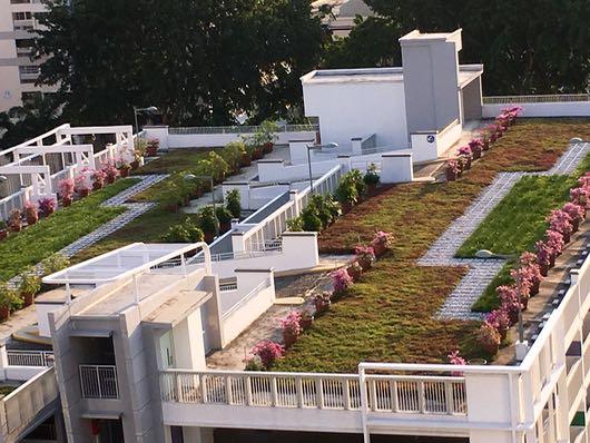 Roof-top Garden02