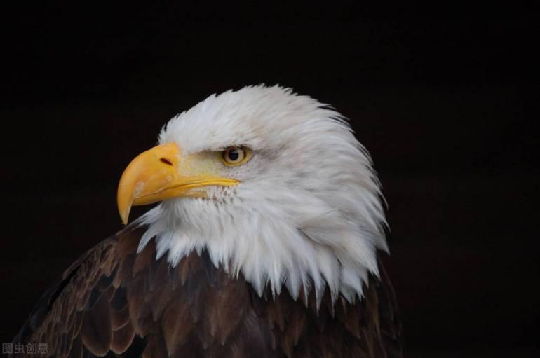 還不長記性?眼見碰瓷新疆棉花失敗,西方盯上新疆生產的人造纖維