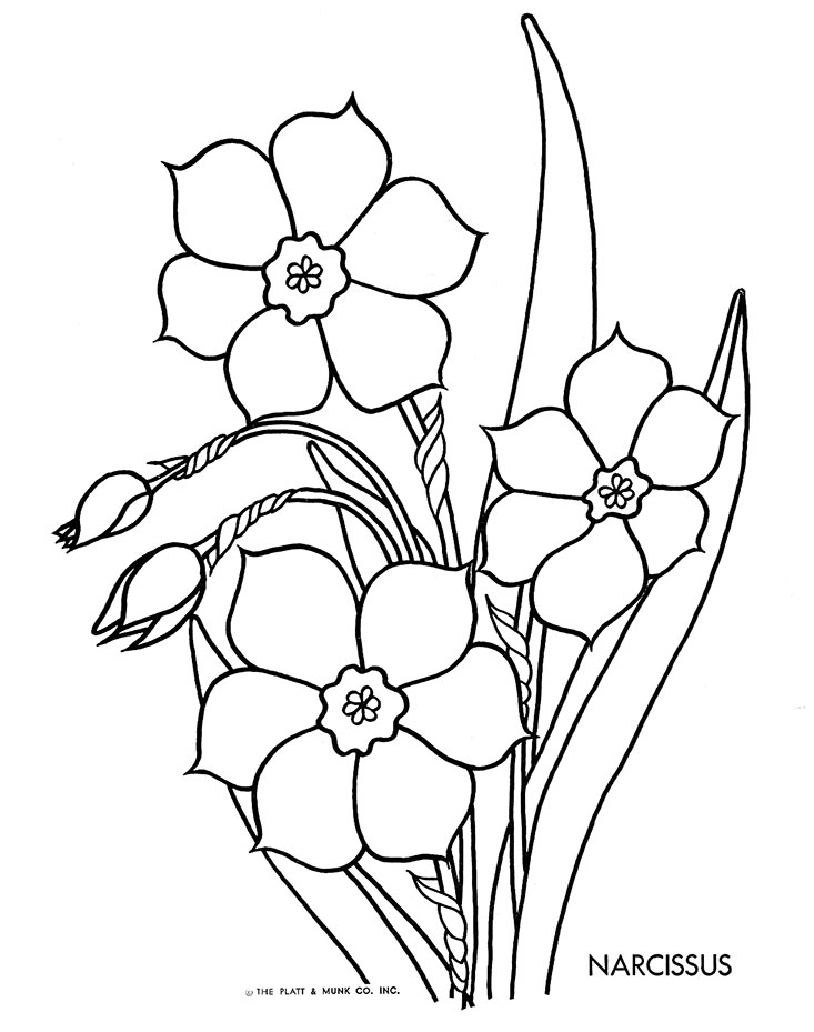 Pencil Of Daffodils Coloring Pages