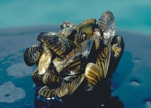 Quinault Invasive Species Project