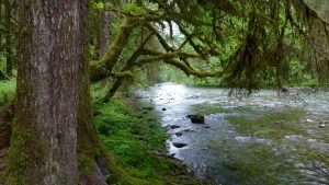 Quinault Water Protection Project | Quinault Environmental Protection Program