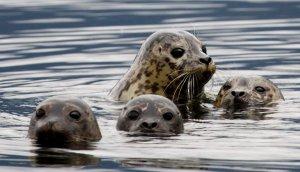Quinault Marine Resources Program