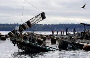 Cooke Aquaculture Fined | Quinault Division of Natural Resources