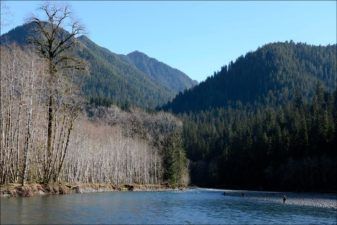 Quinault Habitat Management Program | Quinault Fisheries Department