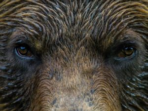 Quinault Wildlife Protection Program | Quinault Environmental Protection Department