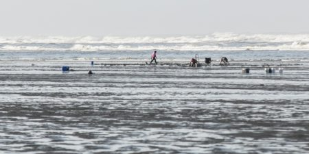 Quinault Shellfish Recovery Program | Quinault Fisheries Department