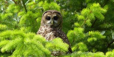 Quinault Wildlife Habitat Project