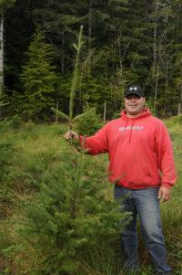 Quinault Regeneration Program | Quinault Forestry Department