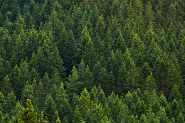 Quinault Stand Improvement Program | Quinault Forestry Department