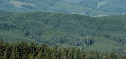 Quinault Timber Harvest Program | Quinault Forestry Department