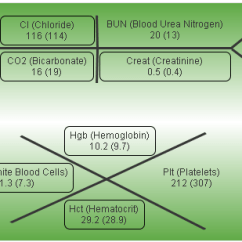 Lab Tree Diagram Glow Plug Wiring 7 3 Idi Medical Diagrams Lft Data Today Rh D86el2 Bestattungen Eschershausen De Charting Blank