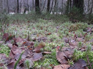 Some of the unique vegetation that lives on peat bogs.