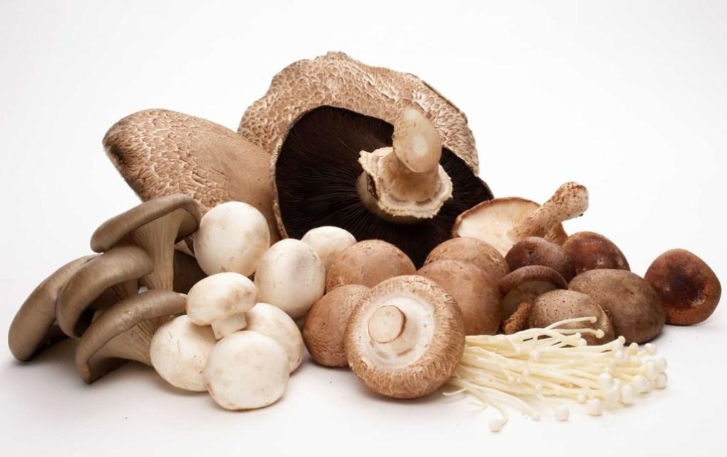 Mushroom-Group-1024x644.jpg