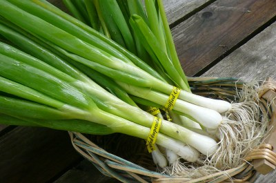 green-onions-store