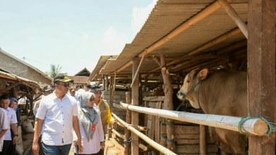 Photo of Usaha Pakan Ternak Berpotensi Serap Tenaga Kerja Lokal