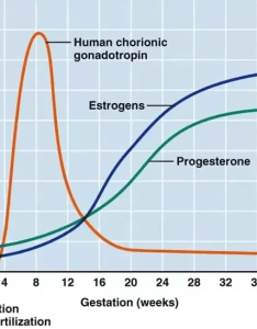 In both cases too low progesterone levels will prevent  pregnancy either by preventing the release of an egg or attachment also what is difference between pre ovulation and early rh quora