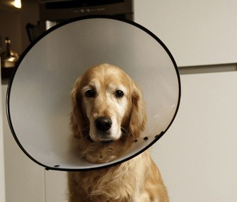 How to keep my dog from scratching his ear - Quora