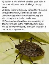 Why are there so many stink bugs in my house? - Quora