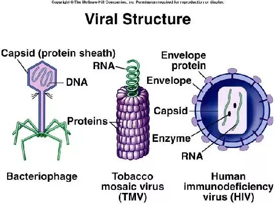 basic virus diagram automotive electrical wiring do viruses have cell walls what is their complete structure quora virisus not wall only exists in plant a those are images that shows deferent of with legend