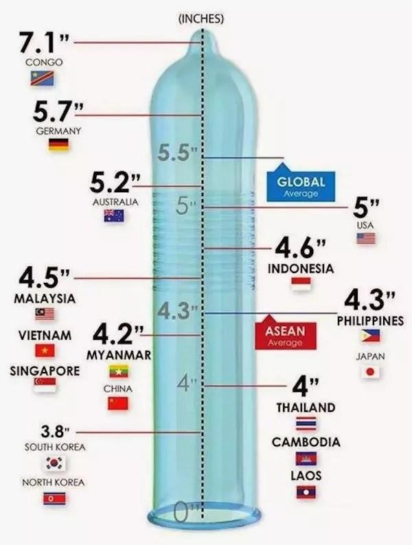 Asian Size : asian, Average, Penis, Asia?, Quora