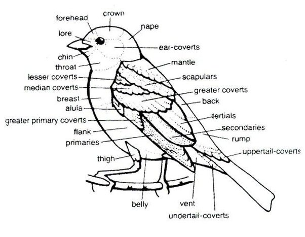 What is the word for the gap between a birds lower beak