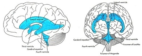 What are some of the current neuroscientific theories of