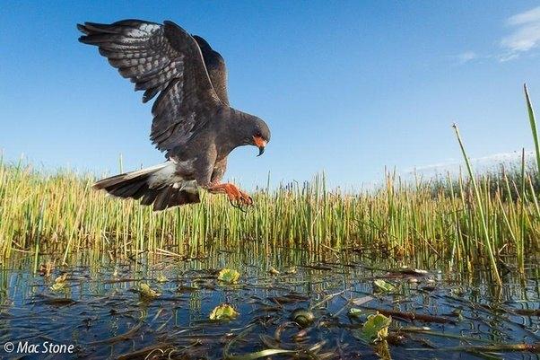What is the Everglades National Park famous for  Quora